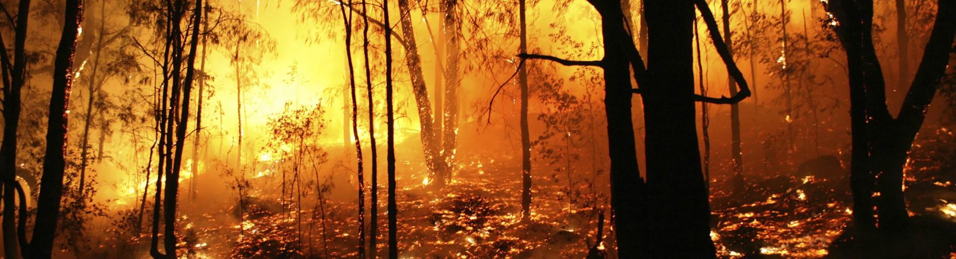 Equipamiento profesional para trabajo en incendios forestales